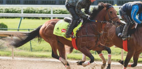 bee buck photography, horse, racehorse, louisville, kentucky, sports photography