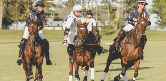 bee buck photography, polo, mt brilliant, farm, kentucky, equine, sports