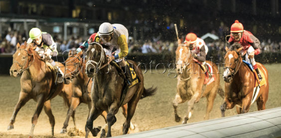 bee buck photography, churchill downs, downs after dark, horse racing, thoroughbred racing