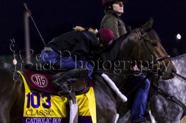 Catholic Boy, Breeders' Cup, horse racing. racehorse, bee buck, bee buck photography, churchill downs, lousiville, kentucky