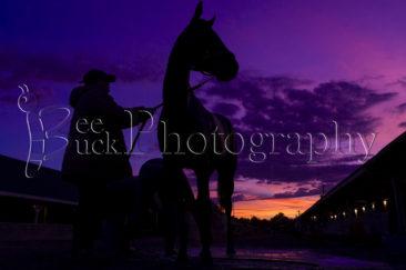 Breeders' Cup, horse racing. racehorse, bee buck, bee buck photography, churchill downs, louisville, kentucky